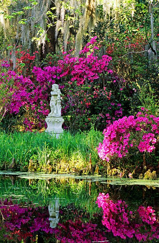 Charleston Sc Garden Tours