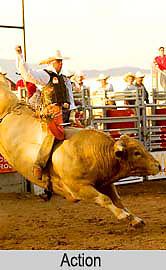 Rodeo, Santa Fe, New Mexico