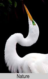 Egret, Key West, Florida, New Mexico